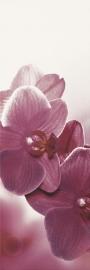 Abrila Inserto Kwiat B   - Wielokolorowe - 200x600 - Wall decorations - Abrila / Purio
