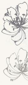Midian Bianco Inserto Kwiat A  - Biały - 200x600 - Dekoracje - Midian / Purio