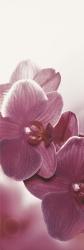 Abrila Inserto Kwiat B   - Wielokolorowe - 200x600 - Dekoracje - Abrila / Purio
